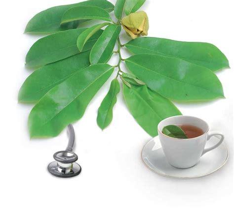 Teh Daun Sirsak tradisional sehat khasiat teh daun sirsak