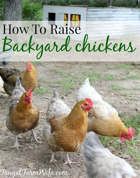 how to raise chickens in your backyard the frugal farm wife