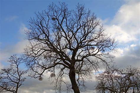 www trees the shadow of trees in winter tejvan