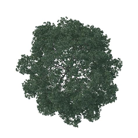 top traditional pine tree images 15 pine tree top view png for free on mbtskoudsalg