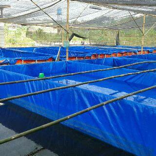 Harga Waring Kolam Ikan waring tl untuk penutup kolam ikan lele