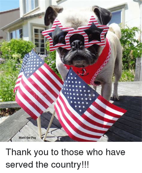 matti the pug matti the pug thank you to those who served the country meme on sizzle