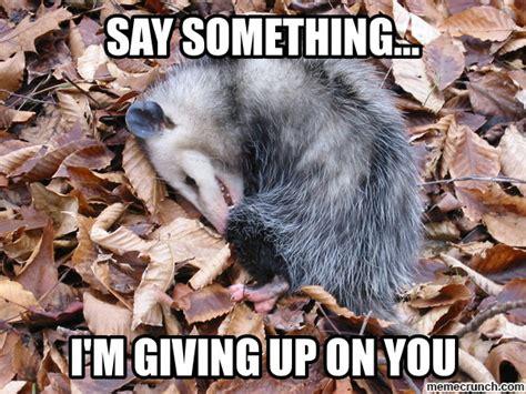 Possum Memes - playing pop music possum