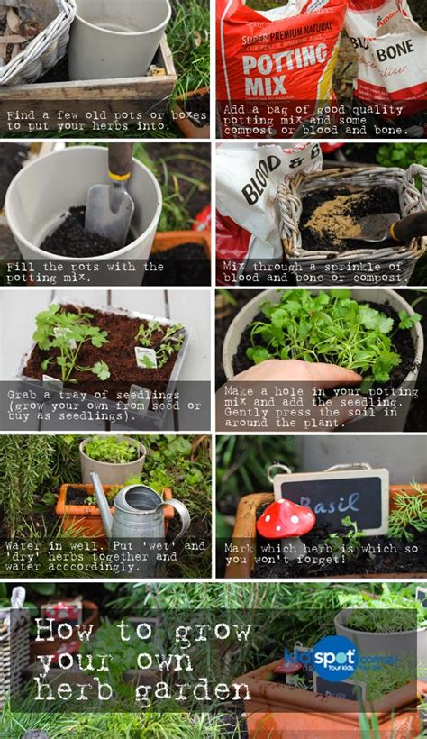 how to grow a herb garden how to grow your own herb garden kidspot
