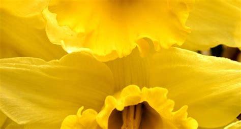 fiore giallo nomi fiori gialli nomi piante perenni nomi dei fiori gialli