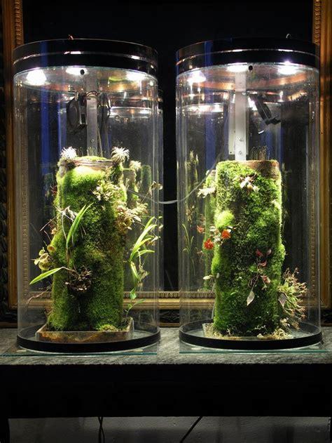 watering plant mounting tubes terrarium ideas