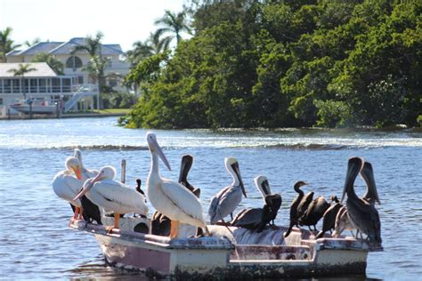bay breeze boat rentals bay breeze boat rentals home facebook