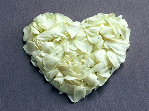 wallpaper bunga ros putih kumpulan gambar bunga mawar putih yang cantik indah blog