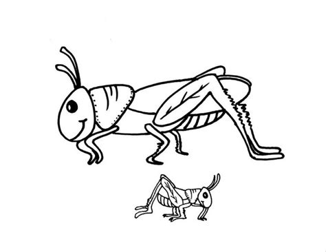 preschool grasshopper coloring pages free animals grasshopper printable coloring pages for