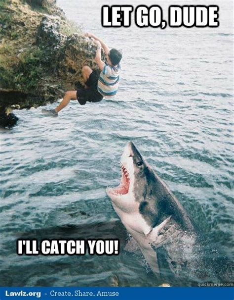 Shark Meme - largest sharks ever caught pics page 3 bodybuilding