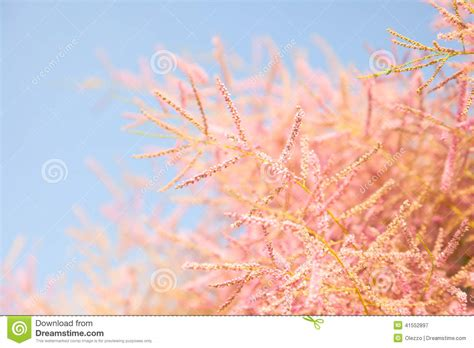Pink Blossom In Blue pink tree blossom on blue sky background stock photo