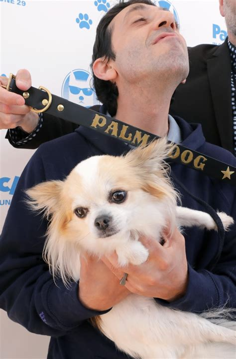 se filmer dogman elenco canino de dogman conquista a palm dog de cannes