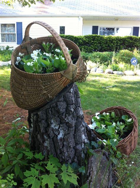 Tree Garden Ideas Tree Stump Garden Tree Stump Ideas Pinterest Gardens Trees And Tree Stumps