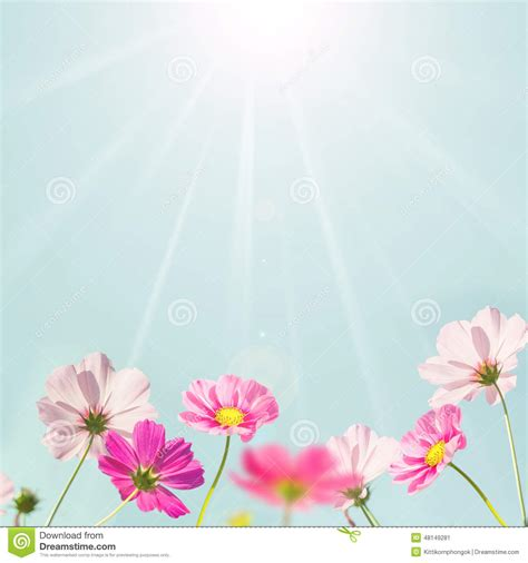 colorful flowers picture orange flowers in bloom light soft pink background color www pixshark images
