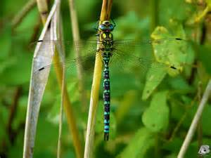 colorful dragonfly colorful dragonfly by indianrain on deviantart
