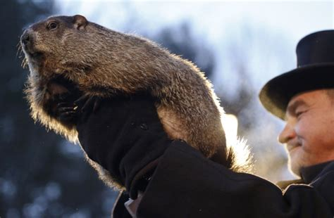 groundhog day us groundhog day punxsutawney phil makes forecast 3 other