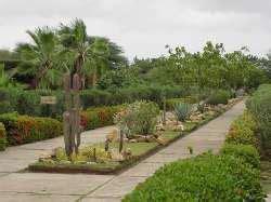 jardin xerofilo coro y sus alrededores tuya