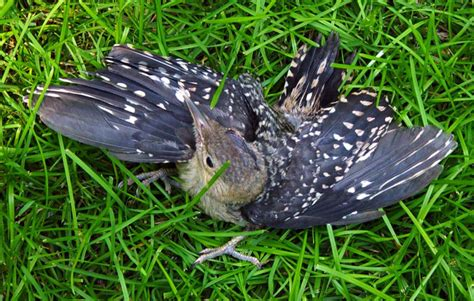 what to do if you find an injured or baby bird