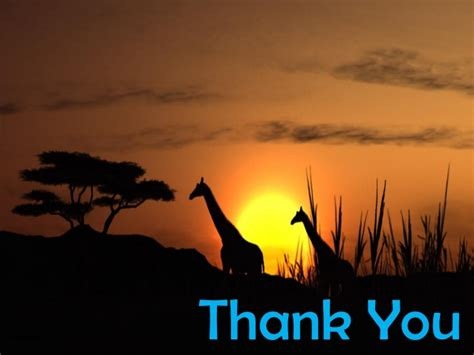interesting hints  adventurous african wildlife