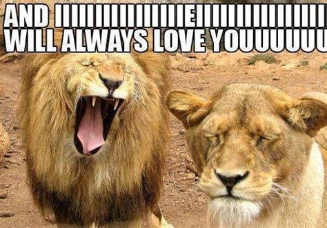 Lion Sex Meme - funny lion meme jokes memes pictures