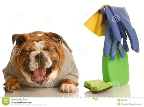 house trained dogs dog not house trained royalty free stock photography image 8490687
