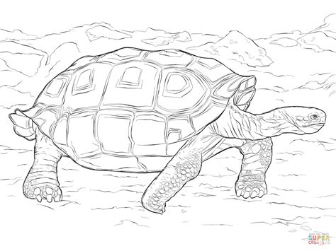 realistic lizard coloring pages reptile coloring pages realistic version of reaic