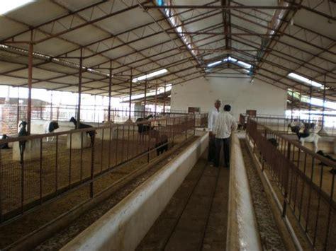 Goat Farming Sheds Design by Rapo Goat Shed Plans India