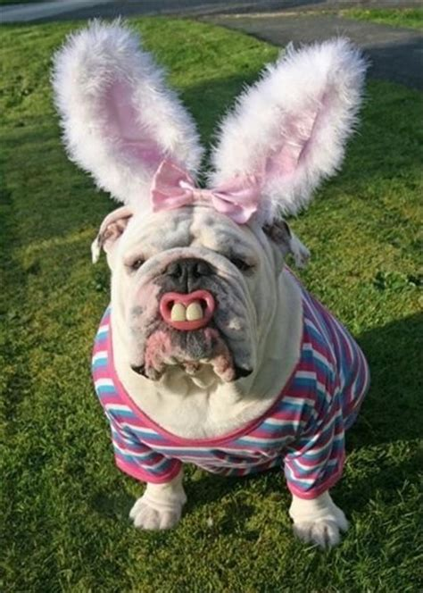 bunny puppy dressed like the easter bunny dump a day