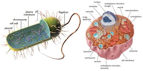 organelles cell membrane chapter  section