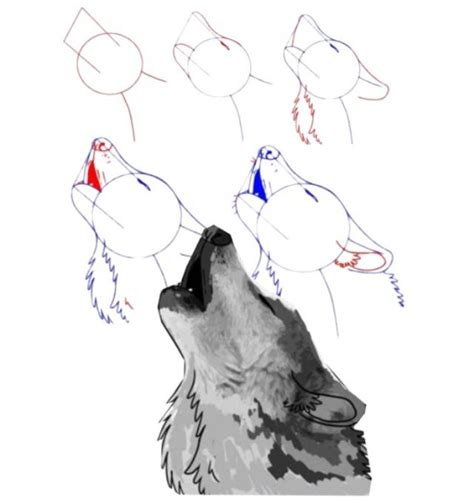 werewolf head tutorial drawn howling wolf step by step pencil and in color