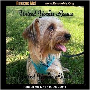 yorkie rescue virginia west virginia yorkie rescue adoptions rescueme org