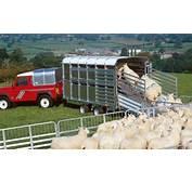 Livestock &187 Ifor Williams Trailers Ltd  Britains Leading