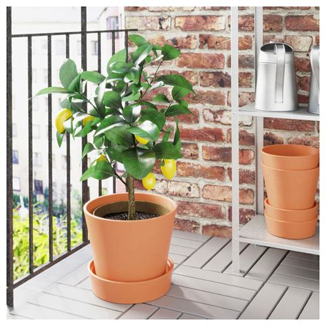 Ikea Planters Outdoor by Ingef 196 Ra Plant Pot With Saucer Outdoor Terracotta 24 Cm Ikea