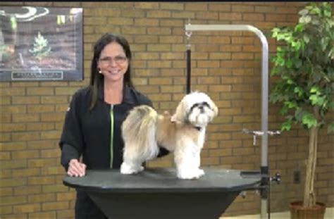 shih tzu grooming products grooming a shih tzu with an asian influenced style part 3 of 3 part series