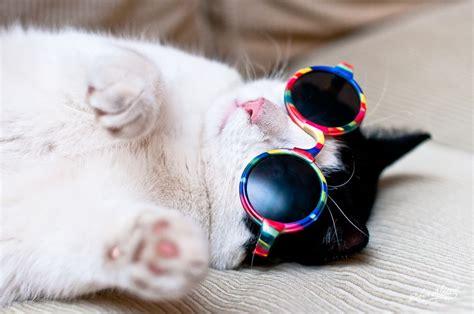 Cool Cat Cool Cat