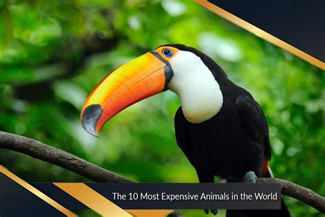 list of 20 most expensive birds most expensive animals in the world top ten list