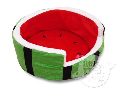 watermelon before bed best 20 small dog accessories ideas on pinterest small