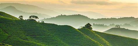 visit cameron highlands   trip  malaysia audley travel