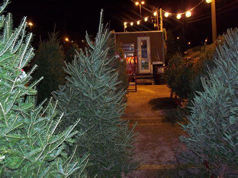 retail christmas trees high ground tree farm