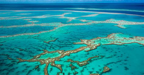 the the great barrier reef of australia its products and potentialities containing an account with copious coloured and photographic illustrations and coral reefs pearl and pearl shell bãªch books great barrier reef corals in australia are now dead news