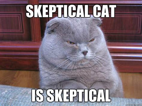 Skeptical Hippo Meme - skeptical cat
