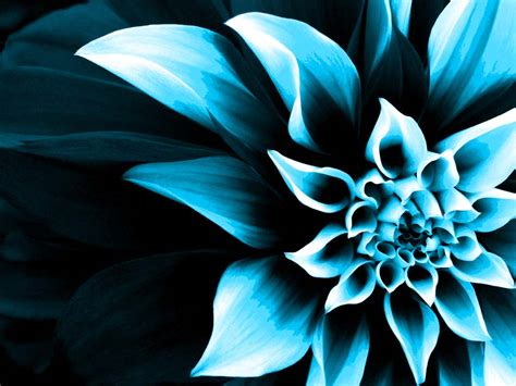 wallpapers that change colors www pixshark com images flower wallpaper color change kamishadjones