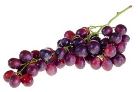 imagenes uvas moradas uvas moradas descargar fotos gratis