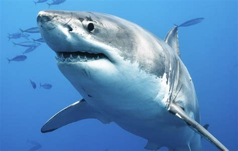images of sharks shark education outdoors