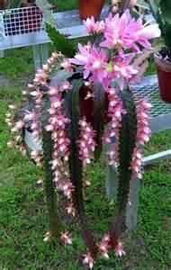 Types of flowering cactus plants cactus ou plantes grasses en fleurs