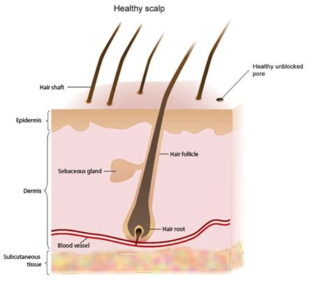 Part Of The parts of the hair www pixshark images galleries