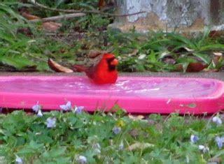 backyard bird sanctuary 46 best images about foster s backyard bird sanctuary on pinterest