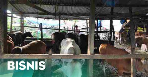 pembuatan faktur pajak valas pajak untuk sapi akhirnya dihapus okezone ekonomi