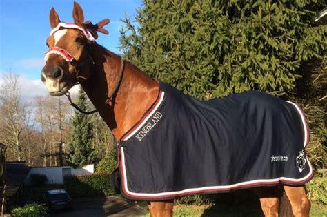 decke pferd kleiner neujahrswettbewerb schickt eure fotos der help