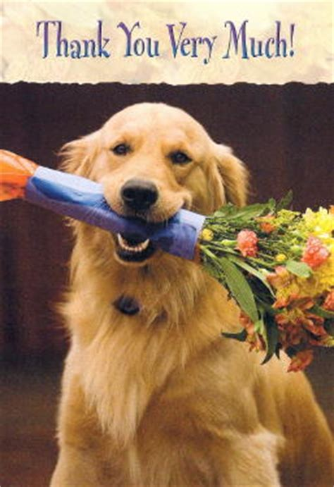 golden retriever cards golden retriever cards golden retriever birthday cards golden retriever gifts